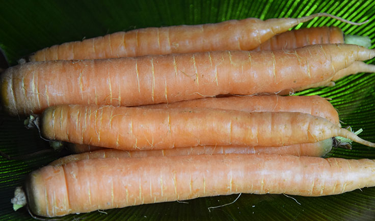 smooth large local carrots