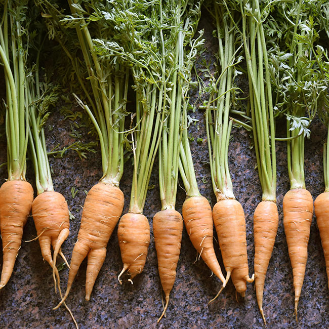 local carrots with carrot tops and funny shapes