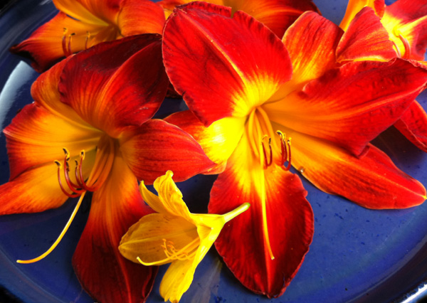 How to Eat Daylilies, with Recipes and Safety Tips