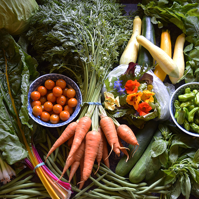 seasonal vegetables June: carrots, cherry tomatoes, green beans, rainbow chard, shishito peppers, cabbage, flower salad mix