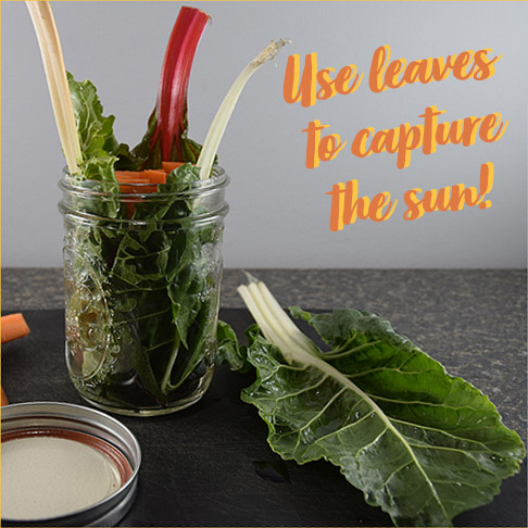 jar lined with chard leaves, with carrot sticks