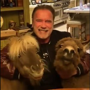 Arnold S and two miniature horses